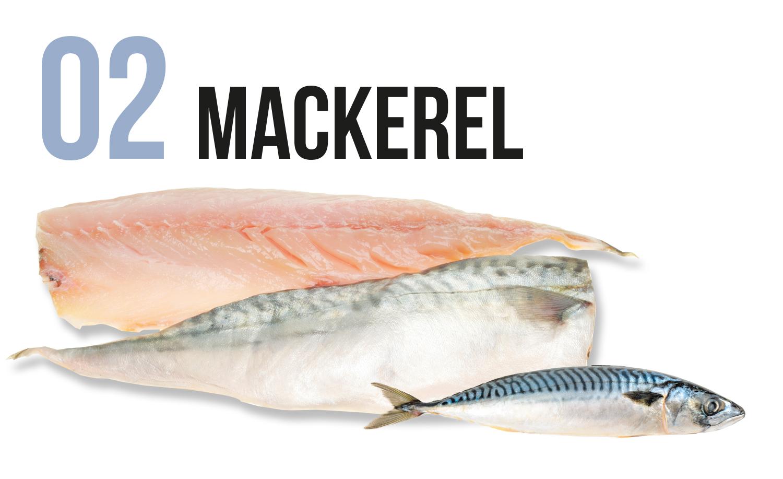Mackerel fish and fillet