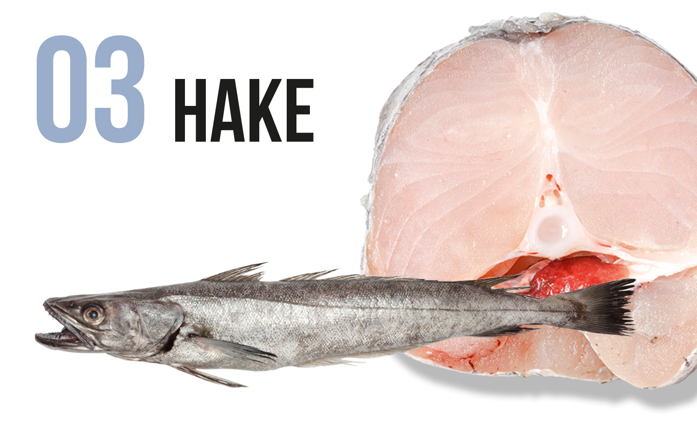 Hake fish and fillet