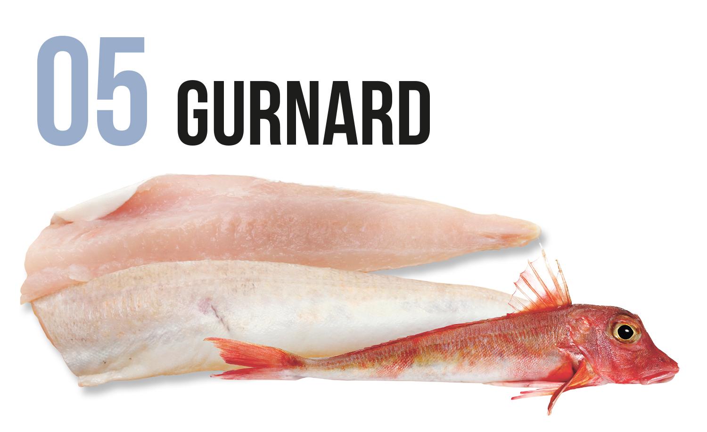 Gurnard fish and fillet